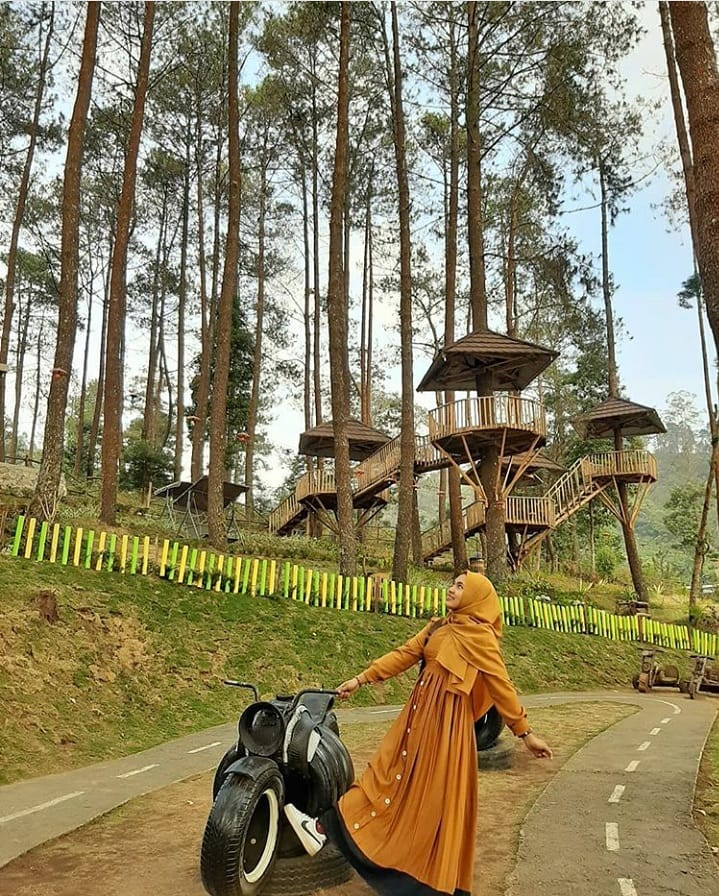 View HUtan Pinus