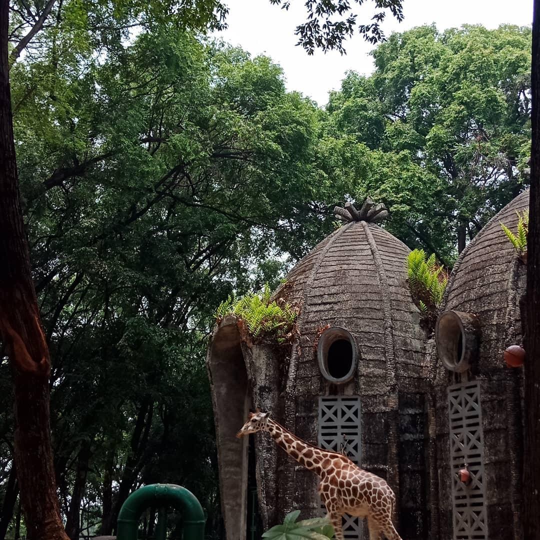 Kebun Binatang Ragunan Kawasan Hijau