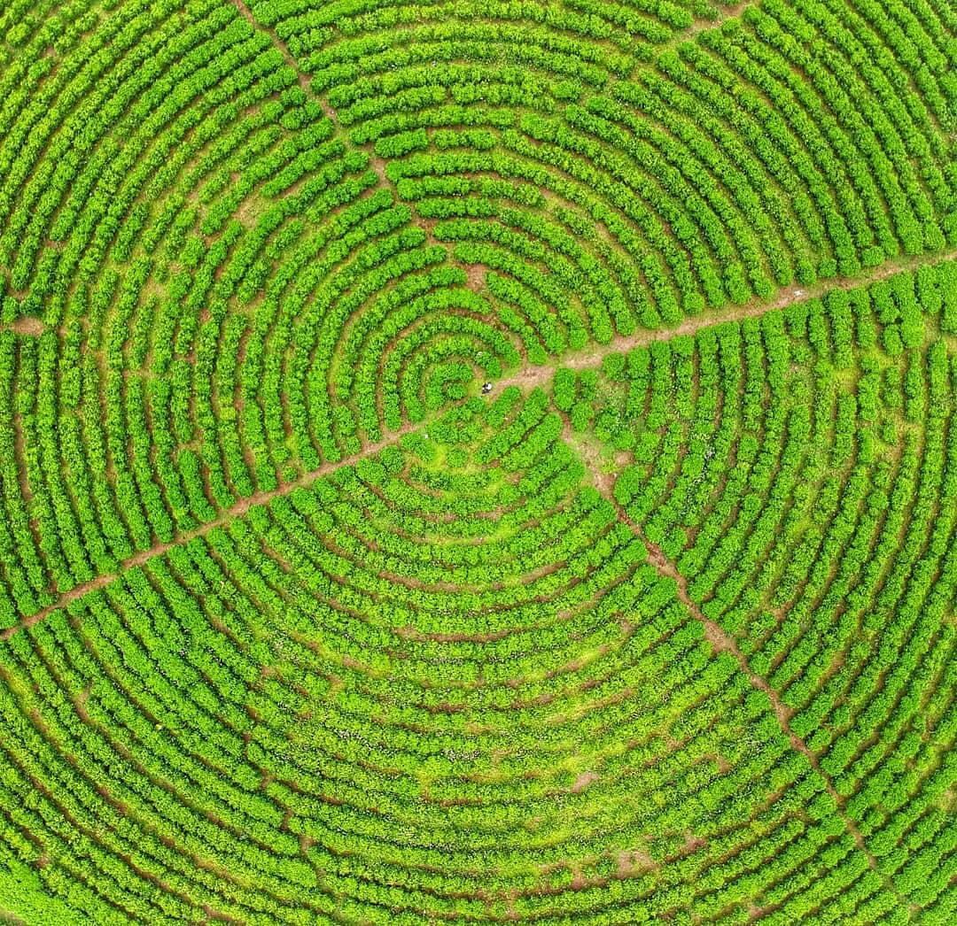 Kebun Teh Sukawana Drone