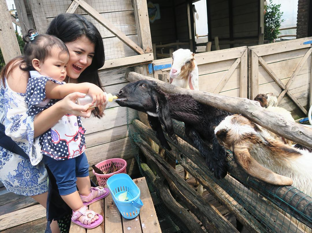Lactasari Mini Farm