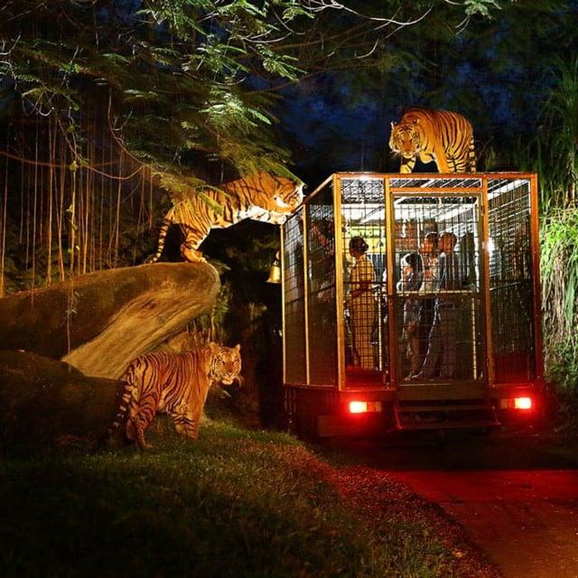 Taman Safari Indonesia 3