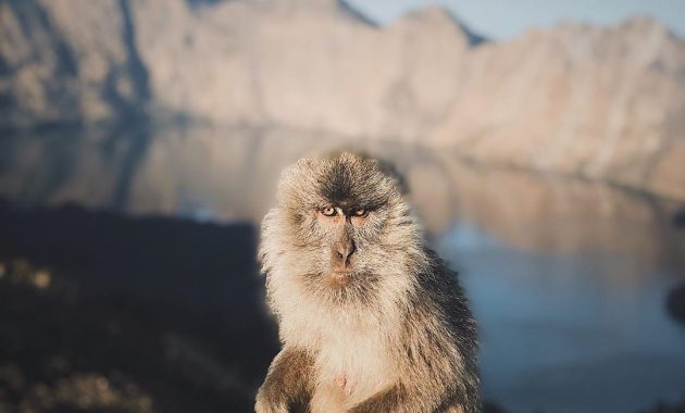 Menjelajah Gunung Rinjani Bersama Sang Penjaga Dewi Anjani 7