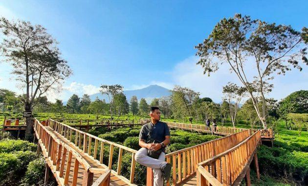 Wisata Petik Teh Di Kebun Teh Wonosari Malang Jawa Timur 2