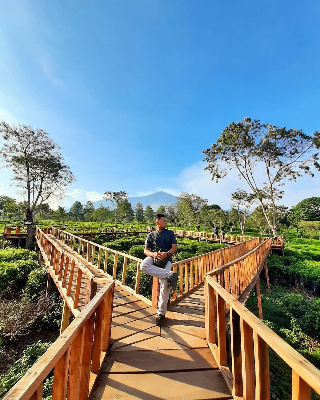 Gambar Kebun Teh Lawang Tiket Masuk Kebun Teh Wonosari Malang 2020 Wisata Dan Penginapan