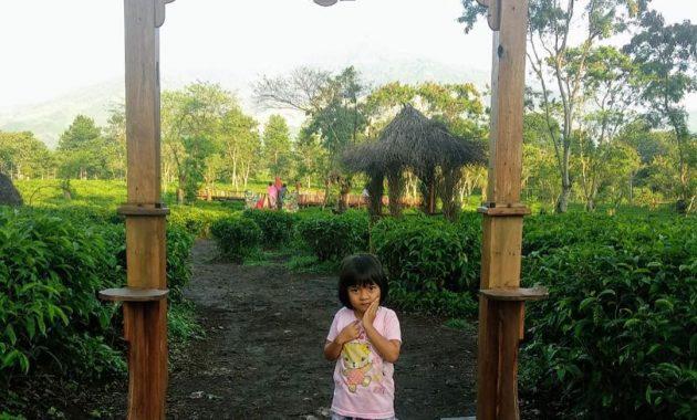 Wisata Petik Teh Di Kebun Teh Wonosari Malang Jawa Timur 5
