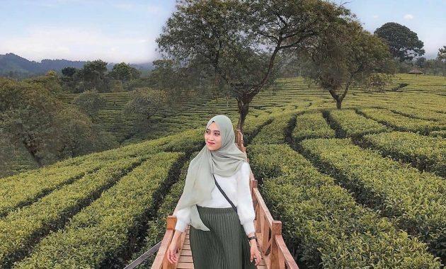 Wisata Petik Teh Di Kebun Teh Wonosari Malang Jawa Timur 3