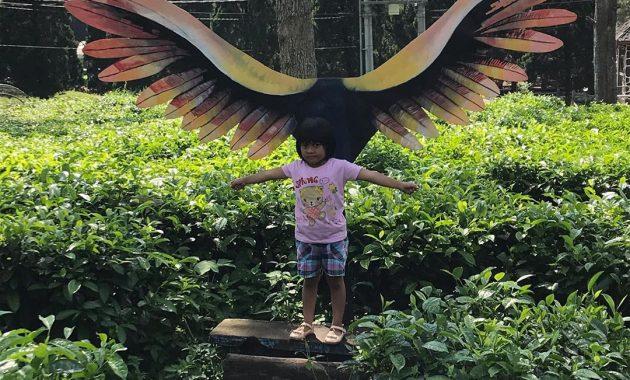 Wisata Petik Teh Di Kebun Teh Wonosari Malang Jawa Timur 6