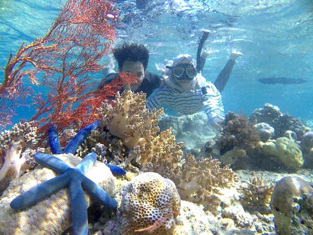 Alam Bawah Laut Pulau Menjangan