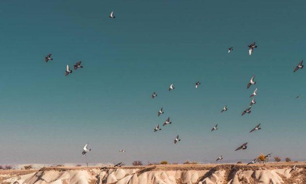 Menikmati Bentang Alam Kapadokia Turki Dari Atas Balon Udara 8