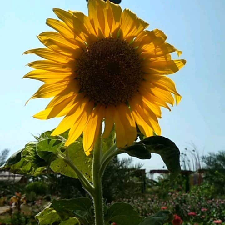 Matahari Green Garden Magetan