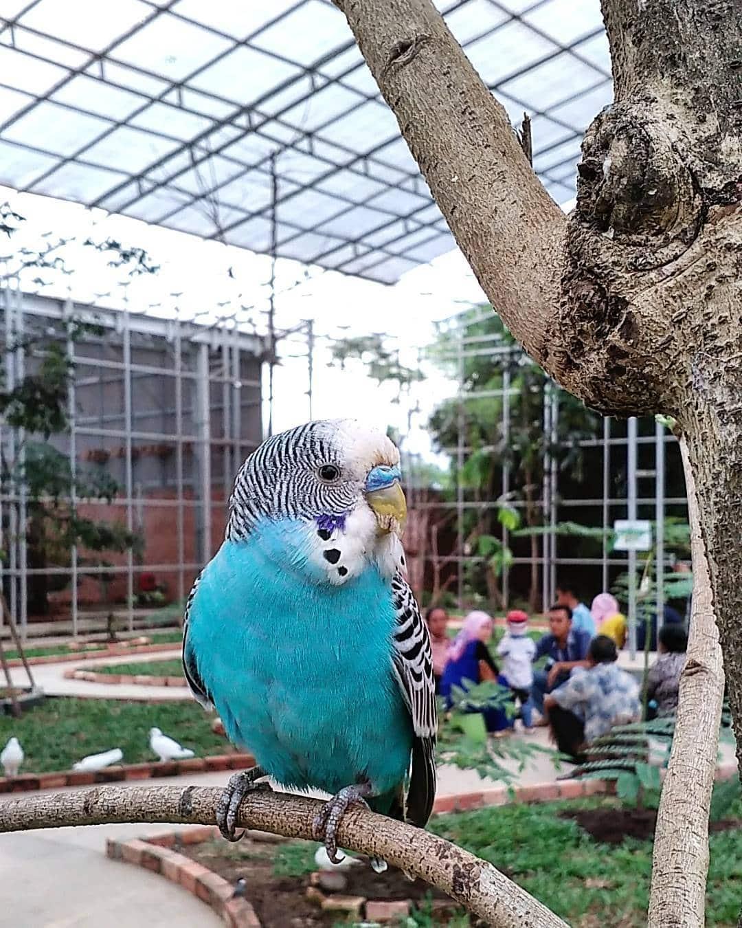 Koleksi Palembang Bird Park