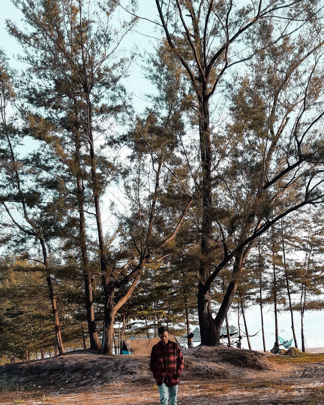 Pohon Pantai Tikus