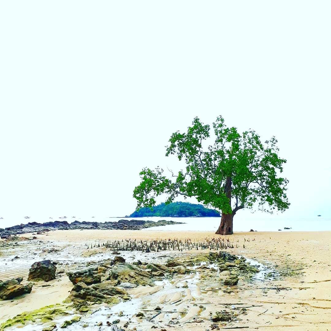 Pohon Pulau Pelepas