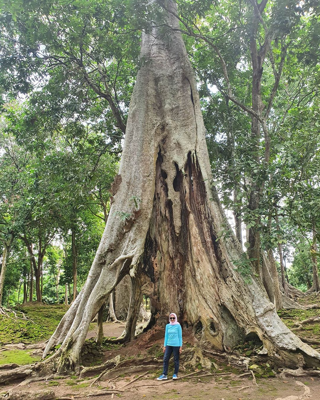 Pohon Tempat Wisata Jambi