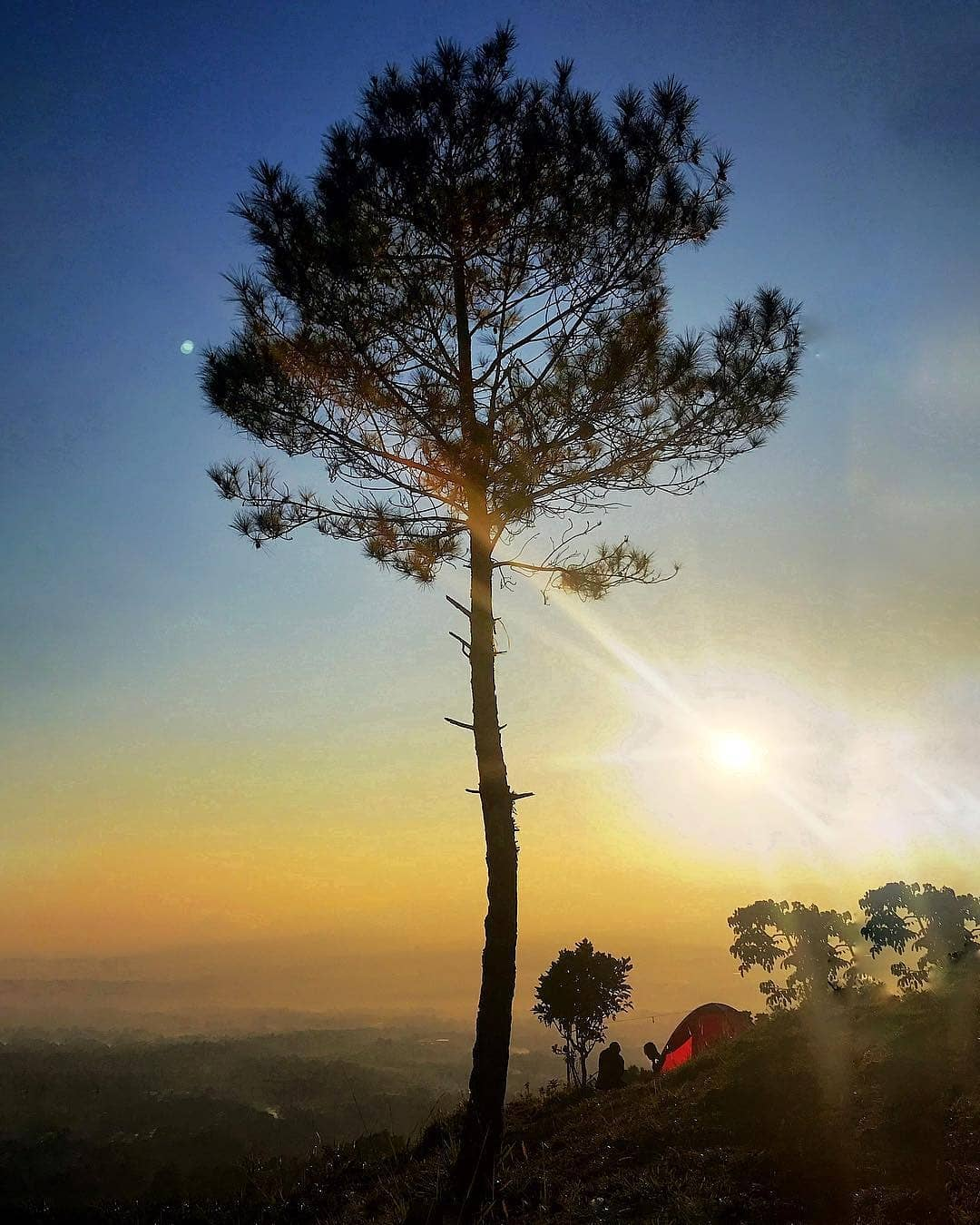 Pohon bukit alesano