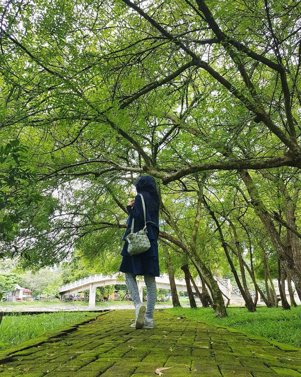 Gadis hutan punti kayu