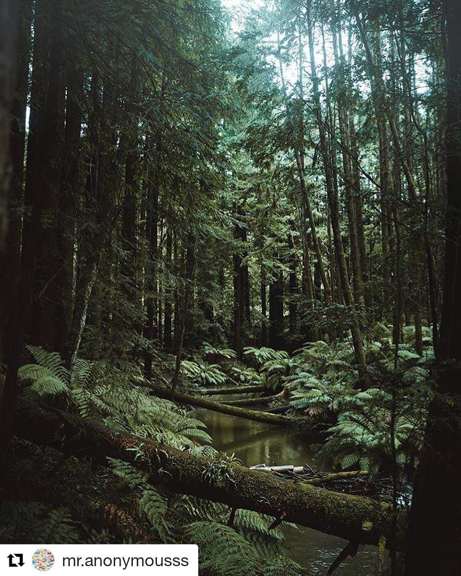 Hutan kebun raya bogor