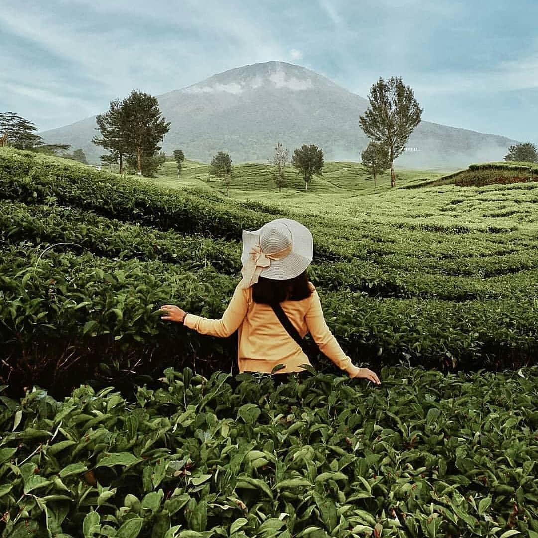 Segar kebun teh dempo