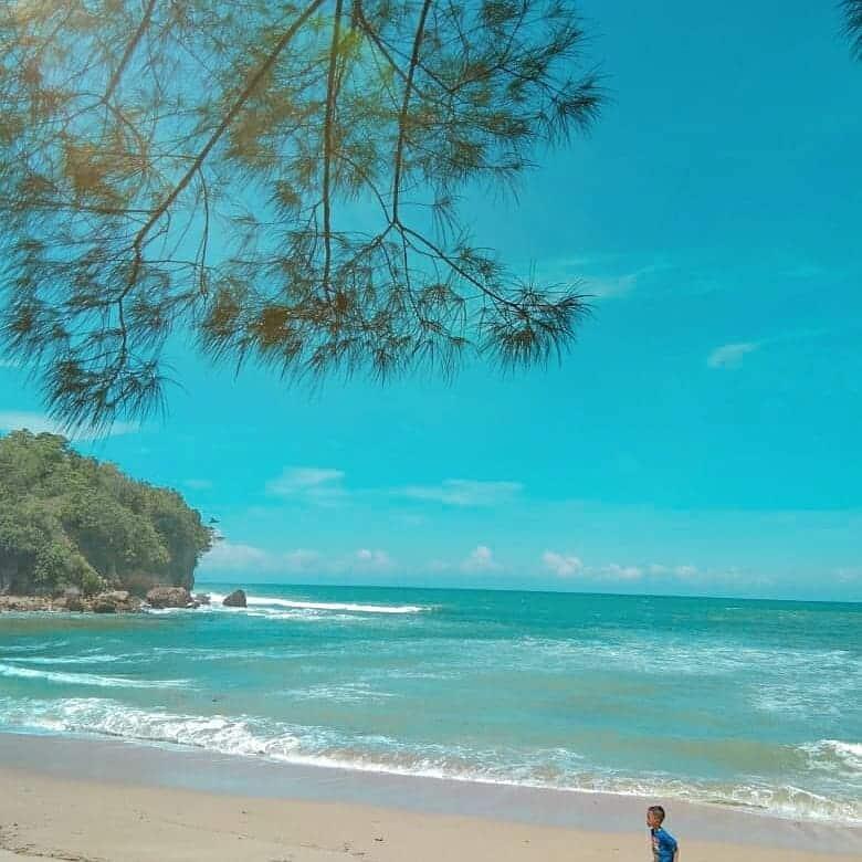 pohon Pantai pangi