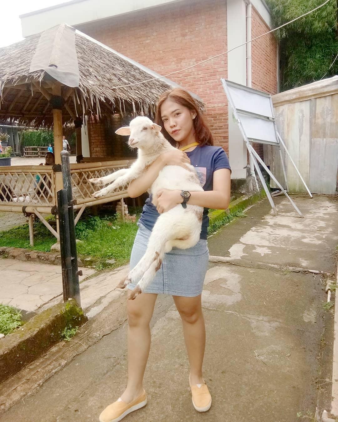 Kambing D Kandang Amazing Farm