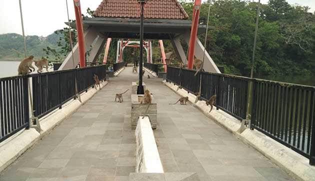 Goa Kreo Monyet