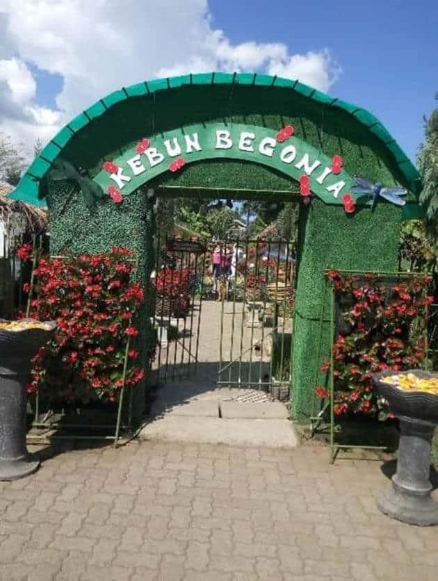 Harga Tiket Masuk dan Peta Lokasi Kebun Begonia Lembang Bandung 1