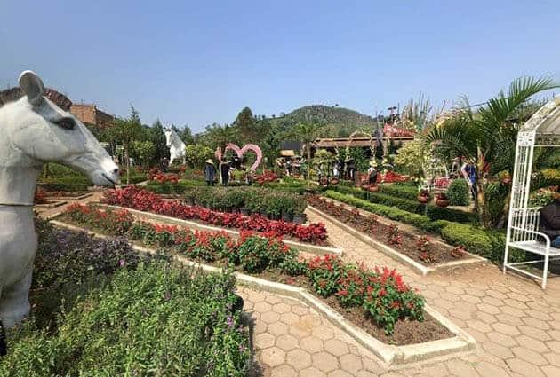 Kebun-Begonia-Hijau