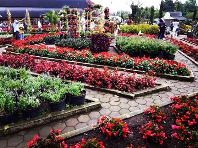 Kebun-Begonia-Sepi