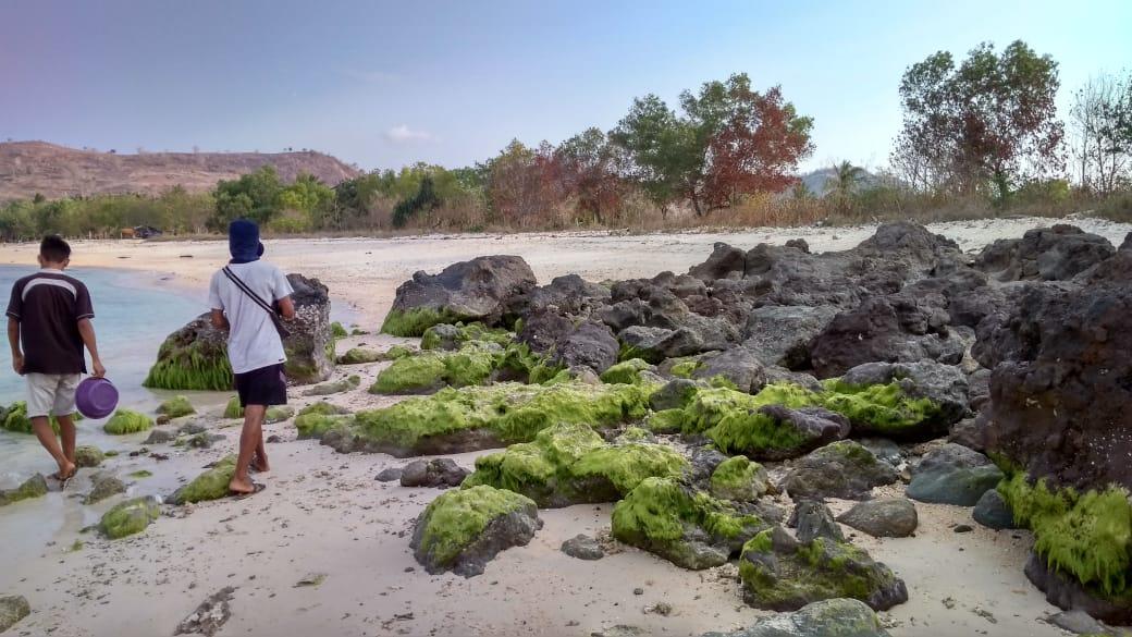 Pantai Elak Elak Lombok 7