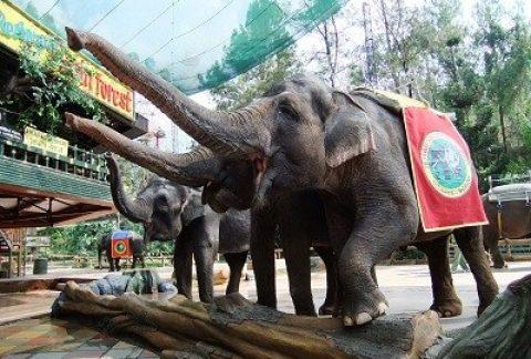 Harga Tiket Masuk dan Jam Buka Taman Safari Indonesia, Wahana Lengkap + Info Promo 35