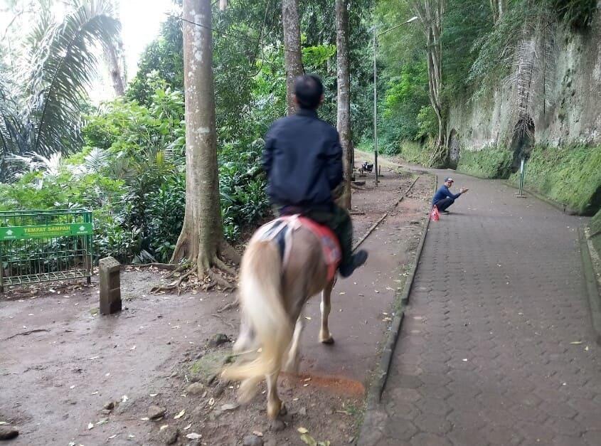 Taman-Hutan-Raya-Juanda-Kuda