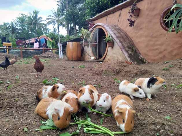 Taman Wisata Mekarsari Bogor Kelinci