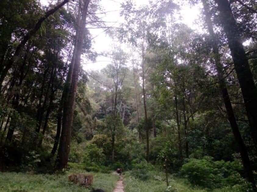 Umbul Songo Kopeng Hutan