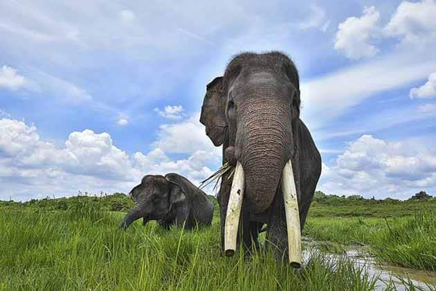 Way Kambas Gajah Gajah
