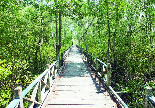 mangrove tarakan